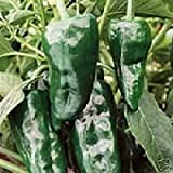 Pepper Hot Poblano Ancho Great Heirloom Vegetable 30 Seeds