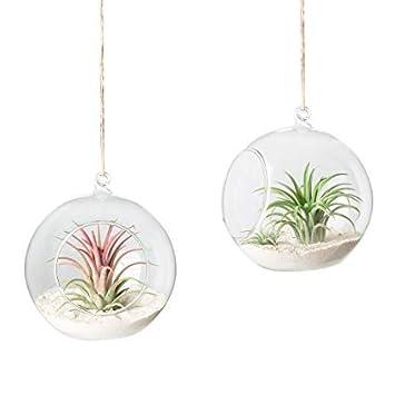 Review Glass Hanging Terrarium Air