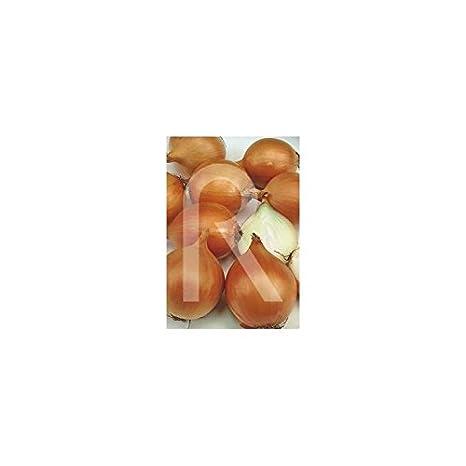 Rocalba - Semilla de cebolla valenciana: Amazon.es: Jardín