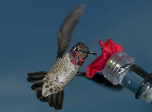 (GG) 2 Hand HELD OR Window Hummingbird FEEDERS
