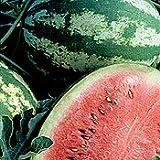 Crimson Sweet Watermelon - 40 Seeds - BONUS PACK!