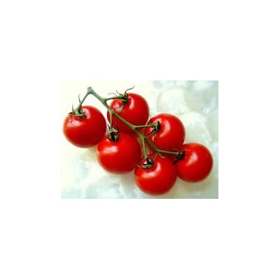 CAMPARI TOMATO, sweet vine tomatoes exotic fruit vegetables plant seed -25 SEEDS : Garden & Outdoor
