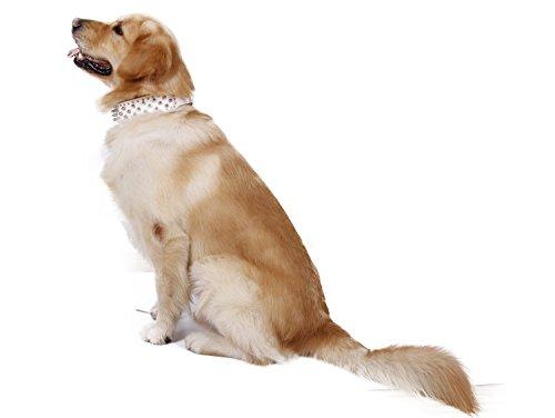 Shu-pets store, Pet Necklace, Fashion Multicolor Leather Puppy Pet Dog Collar Cat Neck Strap Necklace Pet Necklace (Color : White, Size : (Fang Leather Necklace)