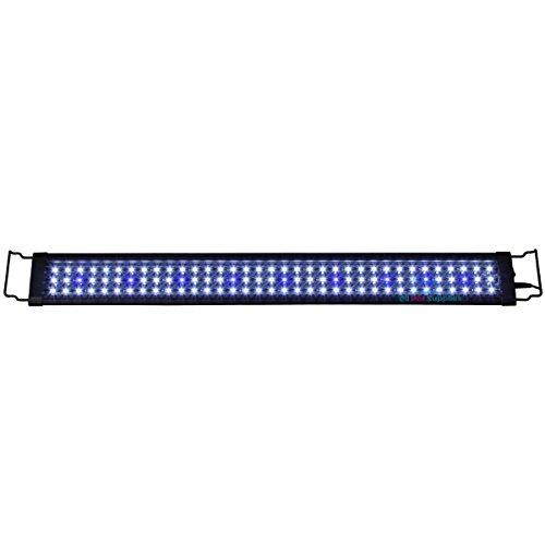 0.1 W Blue & White LED Light 12