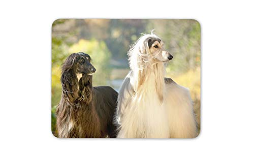 Beautiful Afghan Hounds Mouse Mat Pad - Canine Dog Lovers Computer Gift #16056 ()