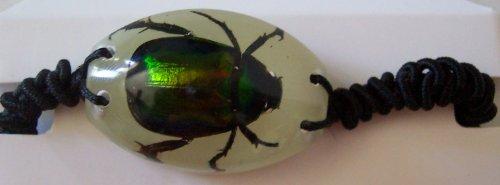 resin beetle - 3