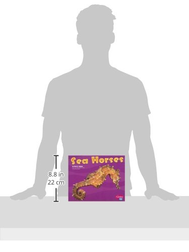 Sea Horses (Under the Sea)