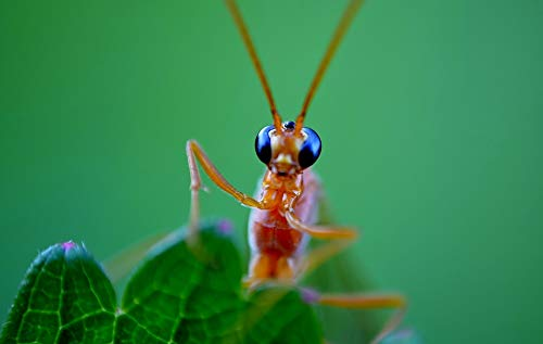 Home Comforts Peel-n-Stick Poster of Probe Macro Eyes Close-up Lens Insect Nature Vivid Imagery Poster 24 x 16 Adhesive Sticker Poster Print (Best Macro Lens For Insects)