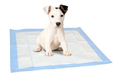 31lV%2BUDclaL - How To House Train A Puppy – Follow These Steps