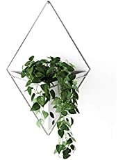 Umbra Hanging Planter Vase & Geometric Wall Decor Containers - Great for Succulents, Air Plant, Mini Cactus, Faux Plants and More