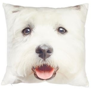 Adorable West Highland White Terrier (Westie/Westy) perro cojín ...