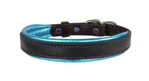 - Perri's Leather Metallic Padded Leather Dog Collar, Large, Black/Turquoise