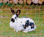 Kaninchen-Elektrozaun 50 m x 65 cm Kaninchennetz Hasenzaun Kaninchenzaun Gartenzaun