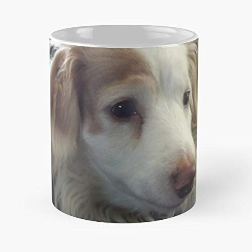 Cute Longhaired White Tan Dachshund Wiener Dog Or Dachs Photograph Miniature Doxie Black Pink Pasley Dressed Up For Christmas Xmas - Coffee Mug And Tea Cup Gift 11 Oz Best Mugs Choose]()