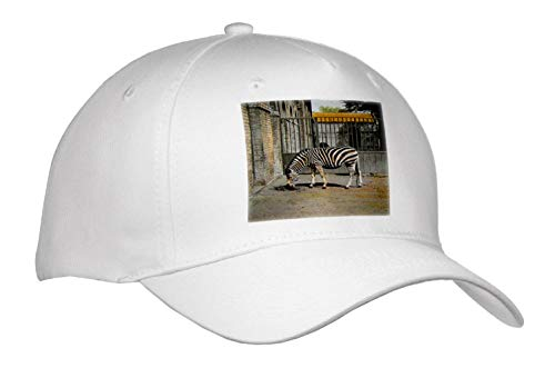(Scenes from The Past - Magic Lantern - Vintage Early 1900s Zebra in The Zoo Victorian Era Photo Wildlife - Caps - Adult Baseball Cap (Cap_301302_1) )