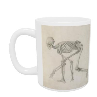 Human Skeleton: Lateral view in Crouching Posture, from the series 'A Comparative Anatomical Exposition of the Structure of the Human Body with that of a Tiger and a Common Fowl' (graphite on paper) by George Stubbs - Mug - Standard Size