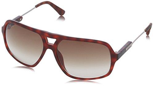 HOGAN Men's HO003056P Brown - Hogan Sunglasses