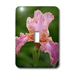 3dRose LLC lsp_83273_1 Hybrid Bearded Iris Flower Louisville Kentucky Na01 Aje0110 Adam Jones Single Toggle Switch ()