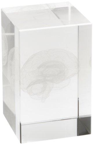 3B Scientific Medart Glass Block Brain Model, 2