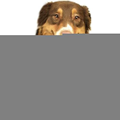 cross ctA German Shepherd Silhouette Dog Fabric Fire Red GIF Dog Bandanas Washable Triangle Adjustable Dog Scarf