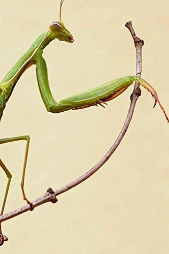 Praying Mantis Notebook por Wild Pages Press