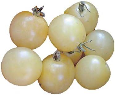ミニ トマト 種まき