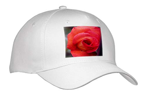 3dRose Stamp City - Flowers - Macro Photograph of a Playboy Rose About to Burst Open. - Adult Baseball Cap (Cap_315582_1)