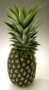 "Sugarloaf Pineapple Plant - Ananas - Great Indoors/Out - 6"" Pot"