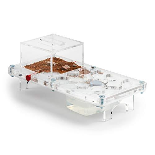 anthouse Ant Farm Mushroom Kit (Formicarium, - Deluxe Acrylic Aquarium