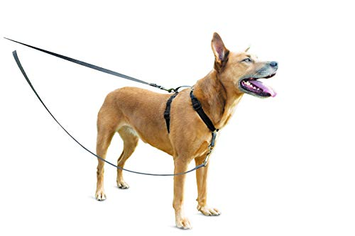 Petsafe Control de Dos Puntos arnés 3 en 1 Reduce los tirones y enseña Buenos Modales con la Correa-Funciona con Perros y Cachorros, Reflective, Talla única