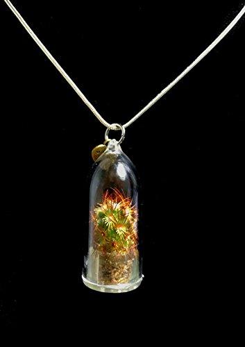 Live Cactus Necklace Wearable Miniature Golden Star Necklace Nature Terrarium Necklace