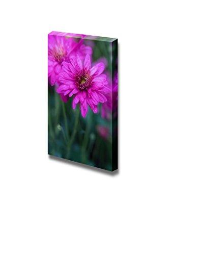 Closeup of a Daisy Beautiful Flower Photograph Wall Decor