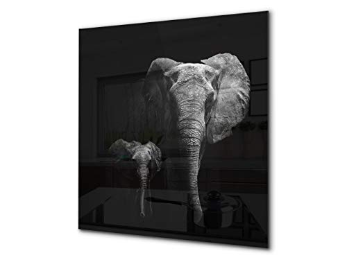 - Toughened glass backsplash - Art glass design printed glass splashback BS21A Animals A Series: Black And White Elephant 3