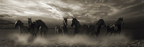 (Pyramid America Wild Stampede Horses Stallions Running Dust Cloud Animal Photo Photograph Poster 36x12 inch)