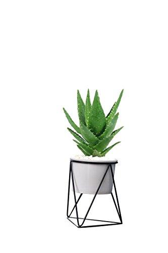 Lainey indoor planter pot modern planter 6