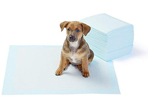 AmazonBasics Dog and Puppy Potty Training Pads, Regular Absorbency