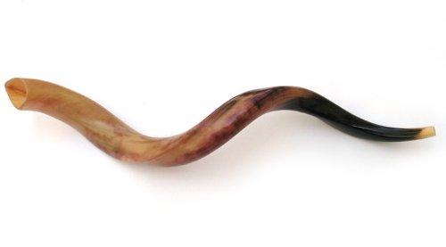 34-36 Large Yemenite Kudu Horn Polished Shofar by Peer Hastam, with Anti Odor Spray, Made in Israel