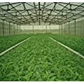 Palace of the sun@Vegetable Green-organic?300+spinach Seeds