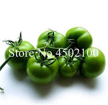 Bonsai 100 PC/Paquete del Arco Iris Raras Tomate Bonsai, Dulce ...