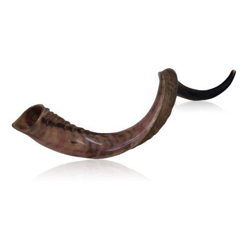 Half Polished Half Natural Kudu Horn Shofar by World Of Judaica