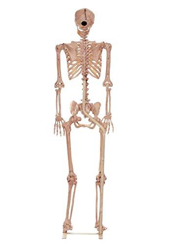 Bone Stand - 5