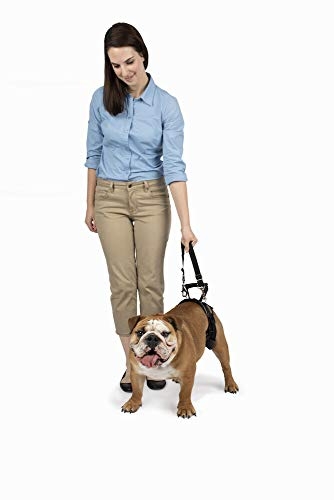 PetSafe CareLift Rear Support Harness - Lifting Aid with Handle and Shoulder Strap - Great for Pet Mobility and Older Dogs - Comfortable, Breathable Material - Easy to Adjust - Medium