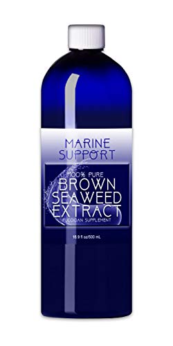 Brown Natural Seaweed (Fucoidan Supplement | 100% Pure Brown Seaweed Extract | Immunity Support | Natural - Non-GMO - Vegan - Organic - Gluten-Free | Antioxidant Boost | Immune Enhancer by Marine Support)