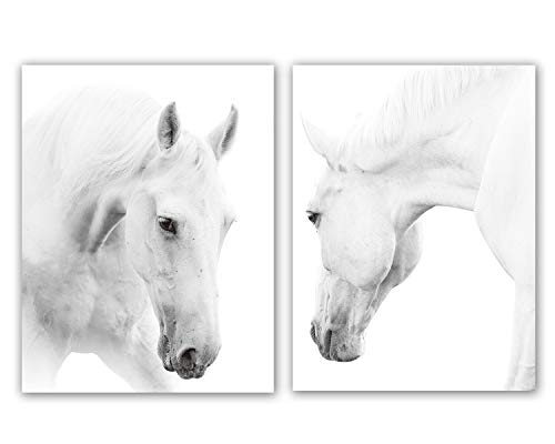 Horse Artwork - White Horse Art Print Set of 2 (12