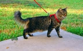 Rabbits and Puppies Extensible Stroll Harness for Kitten Ducomi Silvestro Adjustable Nylon Cat Harness 105 cm Rabbit Pink Safe Walking Harnesses Lead and Leash for Cats