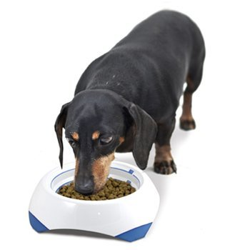 Best Time To Feed Guard Dogs