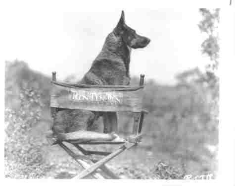 【残りわずか】 写真の犬Star 12x16 Rin Tin Tin 12x16 German Rin Shepard 12x16 12x16 B007RQE5QA, 浜益村:f7c270db --- a0267596.xsph.ru