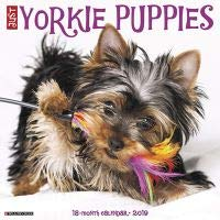 Amazoncom Quality 2019 Just Yorkie Puppies Calendar With Free