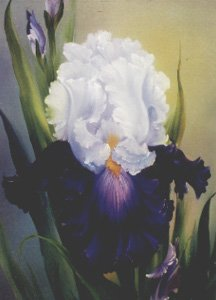 How-to Painting Packet Iris