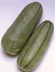 Honeyman Farms 4252 Pickling Melon Green Striped Seed Packet